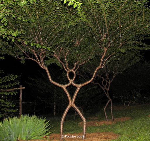 Pooktre Tree Shaping It S Unlike Anything You Ve Ever