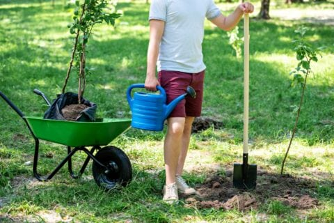 Here are a few things you should know before you buy trees online.