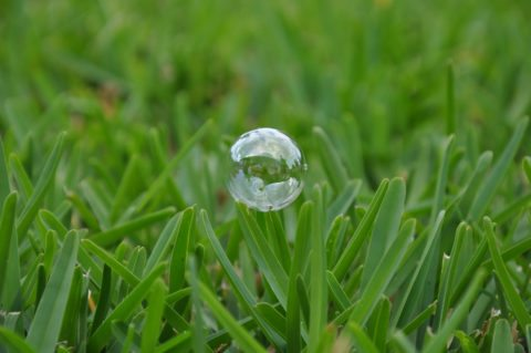 Here are some tips for growing Floratam grass in your yard.