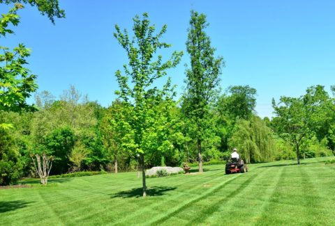 Here are some tips for mowing Floratam grass.