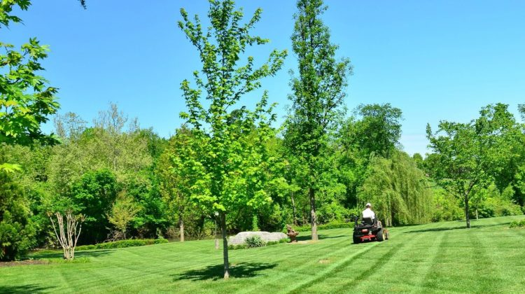 Floratam Grass 101: See If This Pest-Resistant Variety Of St. Augustine Grass Is Right For Your Yard