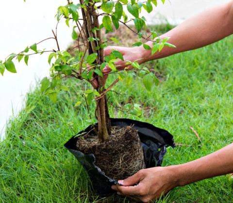 This is an example of a potted tree in a container that you can buy online.
